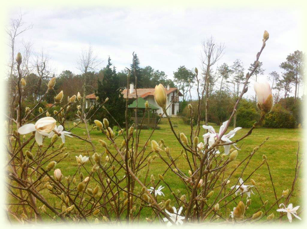 Aménagement paysager chez les particuliers - Landes (40)